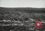 Image of Sugarcane fields Hawaii USA, 1916, second 20 stock footage video 65675022626