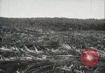 Image of Sugarcane fields Hawaii USA, 1916, second 21 stock footage video 65675022626