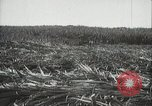Image of Sugarcane fields Hawaii USA, 1916, second 22 stock footage video 65675022626