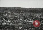 Image of Sugarcane fields Hawaii USA, 1916, second 23 stock footage video 65675022626