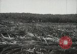Image of Sugarcane fields Hawaii USA, 1916, second 24 stock footage video 65675022626