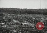 Image of Sugarcane fields Hawaii USA, 1916, second 25 stock footage video 65675022626