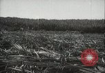 Image of Sugarcane fields Hawaii USA, 1916, second 27 stock footage video 65675022626