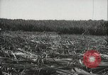 Image of Sugarcane fields Hawaii USA, 1916, second 30 stock footage video 65675022626