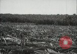 Image of Sugarcane fields Hawaii USA, 1916, second 31 stock footage video 65675022626