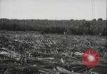 Image of Sugarcane fields Hawaii USA, 1916, second 32 stock footage video 65675022626