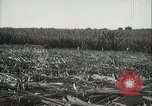 Image of Sugarcane fields Hawaii USA, 1916, second 33 stock footage video 65675022626