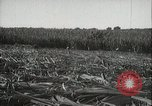 Image of Sugarcane fields Hawaii USA, 1916, second 34 stock footage video 65675022626