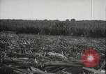 Image of Sugarcane fields Hawaii USA, 1916, second 35 stock footage video 65675022626