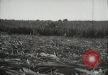 Image of Sugarcane fields Hawaii USA, 1916, second 36 stock footage video 65675022626