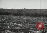 Image of Sugarcane fields Hawaii USA, 1916, second 37 stock footage video 65675022626