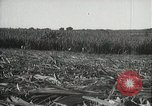 Image of Sugarcane fields Hawaii USA, 1916, second 38 stock footage video 65675022626