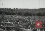 Image of Sugarcane fields Hawaii USA, 1916, second 39 stock footage video 65675022626