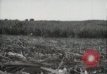 Image of Sugarcane fields Hawaii USA, 1916, second 40 stock footage video 65675022626