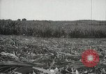 Image of Sugarcane fields Hawaii USA, 1916, second 41 stock footage video 65675022626