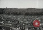 Image of Sugarcane fields Hawaii USA, 1916, second 42 stock footage video 65675022626