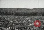 Image of Sugarcane fields Hawaii USA, 1916, second 45 stock footage video 65675022626