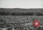 Image of Sugarcane fields Hawaii USA, 1916, second 46 stock footage video 65675022626