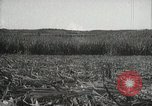 Image of Sugarcane fields Hawaii USA, 1916, second 47 stock footage video 65675022626