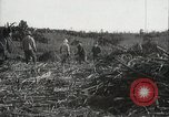 Image of Sugarcane fields Hawaii USA, 1916, second 48 stock footage video 65675022626