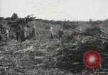 Image of Sugarcane fields Hawaii USA, 1916, second 49 stock footage video 65675022626