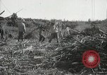 Image of Sugarcane fields Hawaii USA, 1916, second 51 stock footage video 65675022626