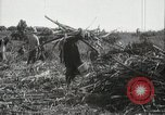 Image of Sugarcane fields Hawaii USA, 1916, second 53 stock footage video 65675022626