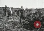 Image of Sugarcane fields Hawaii USA, 1916, second 54 stock footage video 65675022626