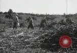 Image of Sugarcane fields Hawaii USA, 1916, second 56 stock footage video 65675022626