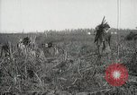 Image of Sugarcane fields Hawaii USA, 1916, second 59 stock footage video 65675022626