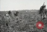 Image of Sugarcane fields Hawaii USA, 1916, second 61 stock footage video 65675022626