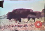 Image of Annual Red Bluff Round Up California United States USA, 1975, second 19 stock footage video 65675022752
