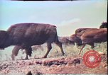 Image of Annual Red Bluff Round Up California United States USA, 1975, second 20 stock footage video 65675022752