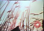 Image of Annual Red Bluff Round Up California United States USA, 1975, second 21 stock footage video 65675022752