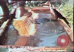 Image of Birch tree Canoe United States USA, 1975, second 28 stock footage video 65675022754