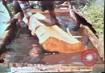 Image of Birch tree Canoe United States USA, 1975, second 30 stock footage video 65675022754