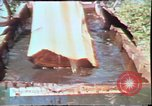 Image of Birch tree Canoe United States USA, 1975, second 31 stock footage video 65675022754