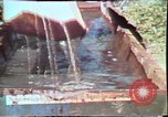 Image of Birch tree Canoe United States USA, 1975, second 32 stock footage video 65675022754