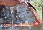 Image of Birch tree Canoe United States USA, 1975, second 33 stock footage video 65675022754