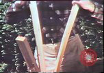 Image of Birch tree Canoe United States USA, 1975, second 40 stock footage video 65675022754