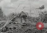 Image of U.S. Army 81st Infantry Division  Palau Islands, 1945, second 23 stock footage video 65675022854