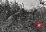 Image of U.S. Army 81st Infantry Division  Palau Islands, 1945, second 33 stock footage video 65675022854