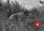 Image of U.S. Army 81st Infantry Division  Palau Islands, 1945, second 34 stock footage video 65675022854