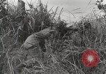 Image of U.S. Army 81st Infantry Division  Palau Islands, 1945, second 35 stock footage video 65675022854