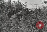 Image of U.S. Army 81st Infantry Division  Palau Islands, 1945, second 36 stock footage video 65675022854