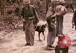 Image of First Division Marines Peleliu Palau Islands, 1944, second 1 stock footage video 65675022907