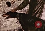 Image of First Division Marines Peleliu Palau Islands, 1944, second 22 stock footage video 65675022907