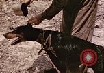 Image of First Division Marines Peleliu Palau Islands, 1944, second 23 stock footage video 65675022907