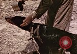 Image of First Division Marines Peleliu Palau Islands, 1944, second 24 stock footage video 65675022907