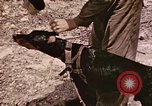 Image of First Division Marines Peleliu Palau Islands, 1944, second 25 stock footage video 65675022907